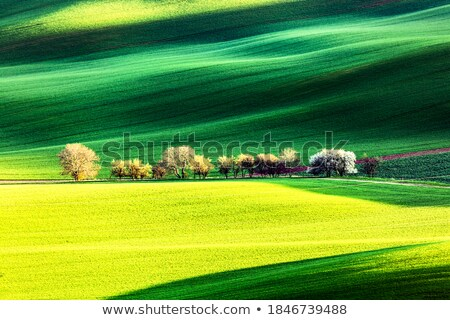 amazing waves of hills and green and blossom trees stock photo © taiga