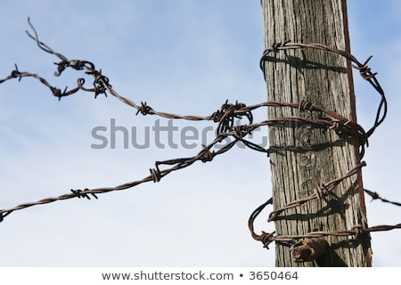Rusty Barb wire around the post Stock photo © stockfrank
