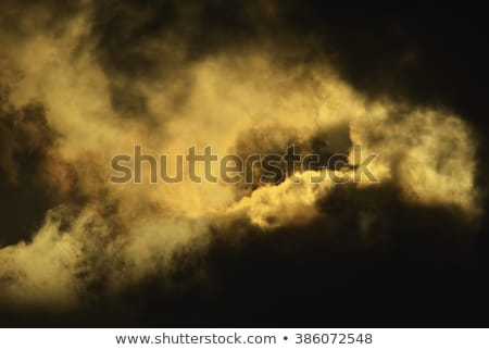 Phoenix · Arizona · sziluett · éjszaka · fák · zöld - stock fotó © pmilota