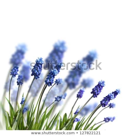 blue spring flowers Stock photo © simply