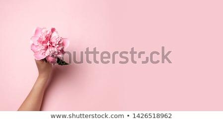 female uterus abstract background stock photo © tefi