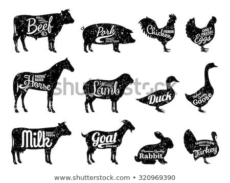 Stok fotoğraf: Etiket · dizayn · çiftlik · hayvanları · örnek · köpek · tavşan