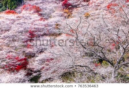 sakura · ősz · tájkép · virág · tavasz · erdő - stock fotó © vichie81