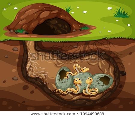 Ingesteld ondergrondse gat illustratie water ontwerp Stockfoto © bluering