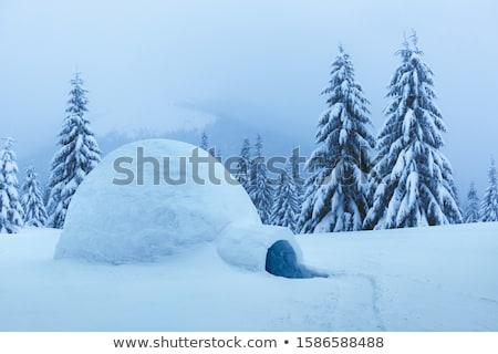 Snow igloo in the winter mountain forest Stock photo © Kotenko