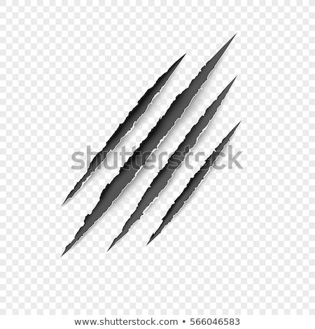 Gato cinzento raspe garra ilustração longo forte Foto stock © lenm