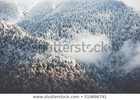 Légifelvétel tűlevelű erdő hegyek tél ködös Stock fotó © vlad_star