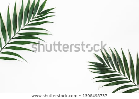 tropical banner frame design layout green palm leaves stock photo © loopall