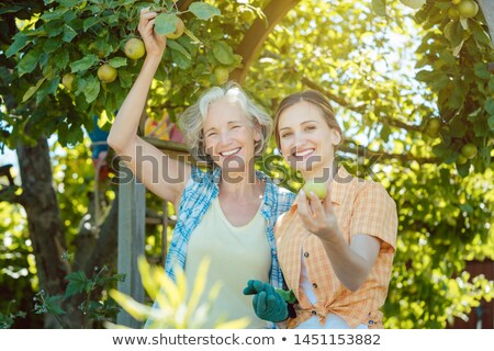 Stock fotó: Mother and adult daughter checking apples in tree