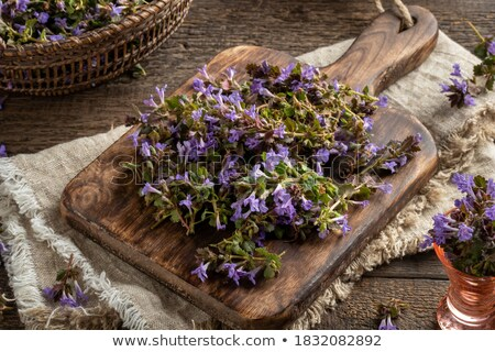 preparation of ground ivy herbal syrup against cough stock photo © madeleine_steinbach