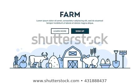 Pig in the farm scene. Concept for animal farm. Flat vector illustration Stock photo © makyzz