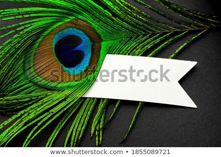 孔雀 注記 テンプレート 実例 テクスチャ 背景 ストックフォト © bluering