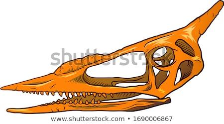 Kézzel rajzolt vadász koponya rajz szín szakáll Stock fotó © netkov1