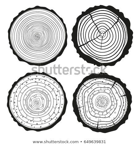 Color Round Wooden Cross Section With Tree Rings Vector Stock photo © pikepicture