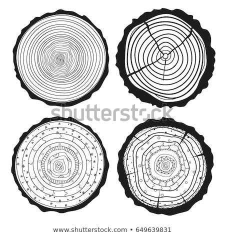 keresztmetszet · szett · fa · gyűrűk · térkép · természet - stock fotó © pikepicture