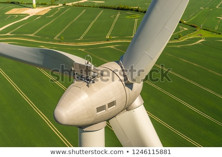 Blossoming rapeseed with wind turbines Stock photo © elxeneize