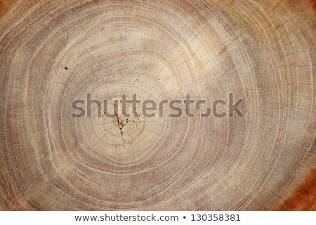 Pine wood ring lines close up. Stock photo © latent