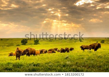 Dois céu grama paisagem fundo verão Foto stock © mariephoto