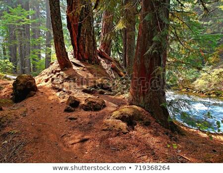 Naast rivier groene water bomen USA Stockfoto © emattil