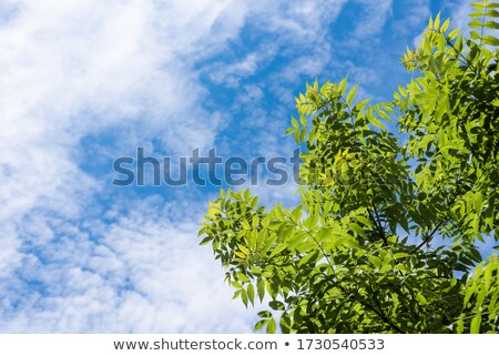 cloudy sky framed by trees with young leaves Stock photo © PixelsAway