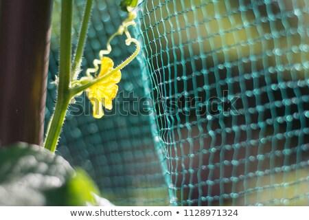 Garden protection net Stock photo © olandsfokus