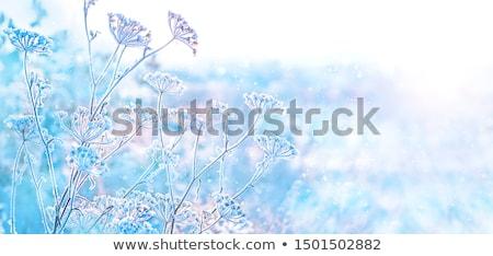 Gelado prado geada coberto alpino grama Foto stock © pancaketom