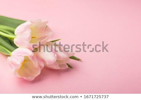 Boldog nőnap ünneplés rózsaszín szín rózsa Stock fotó © SArts