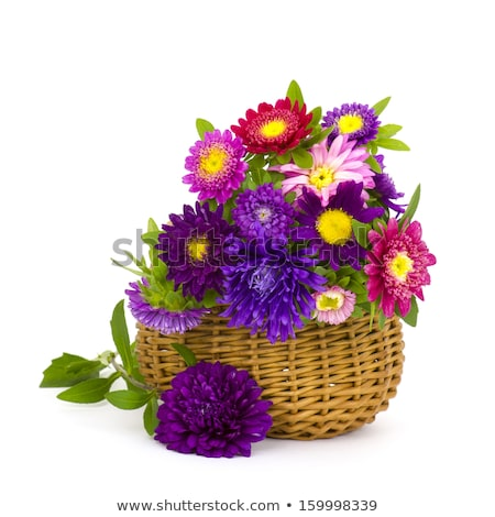 Common daisy flowers in a basket Stock photo © madeleine_steinbach