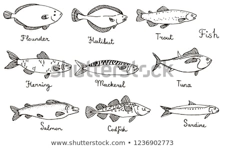 hand drawn mackerel vector illustration in sketch style stock photo © arkadivna