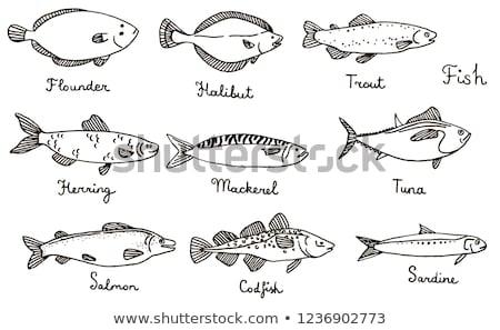 Kézzel rajzolt makréla rajz stílus hal tenger Stock fotó © Arkadivna
