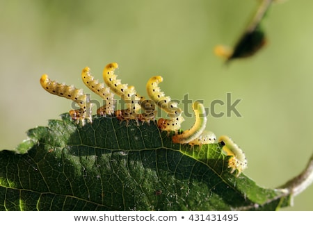 Bird-Cherry moth larvae Stock photo © Stocksnapper