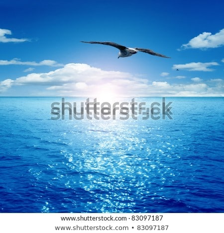 rising sun with reflection in the sea and birds Stock photo © meinzahn