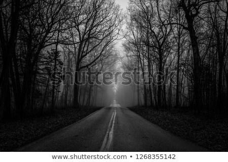 мрачный дороги утра тумана дерево лес Сток-фото © t3mujin