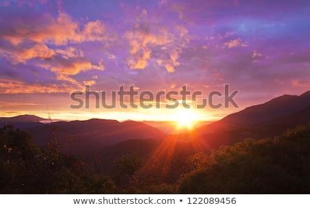 美しい 色 夜明け 丘 スプルース 森 ストックフォト © taviphoto