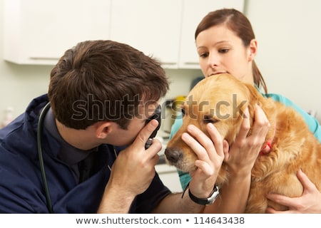 dois · cão · veterinário · assistente · isolado - foto stock © wavebreak_media