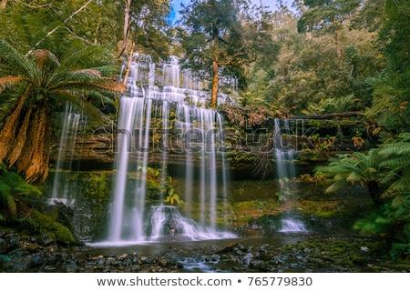 Exuberante Australia paisaje árbol agua verde Foto stock © iofoto