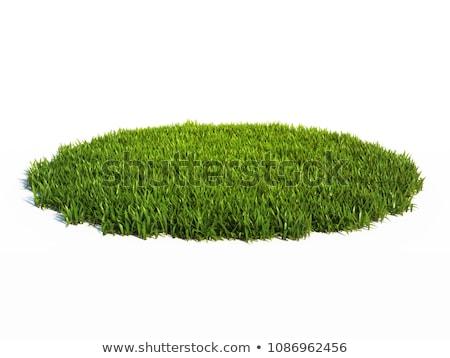 ストックフォト: 新鮮な · 草 · 美しい · 空 · 花 · 雲
