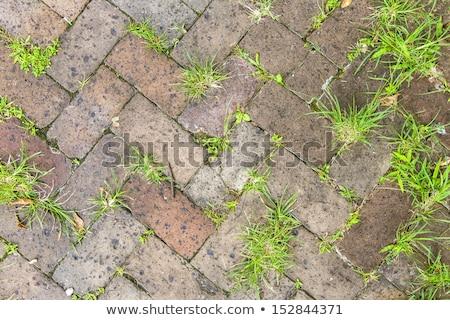Vieux tuiles trottoir plantes joints fond Photo stock © meinzahn