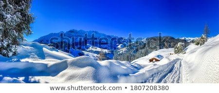 Mountain valley in winter Stock photo © Kotenko