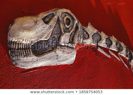 Skull of precious stones 1 Stock photo © Karamio