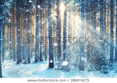 зима заморожены морозный лес небе Сток-фото © justinb