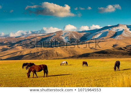 Horses in the pasture in the mountains Stock photo © Kotenko
