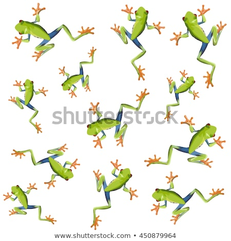 Red eyed tree frog seamless pattern Stock photo © bluering