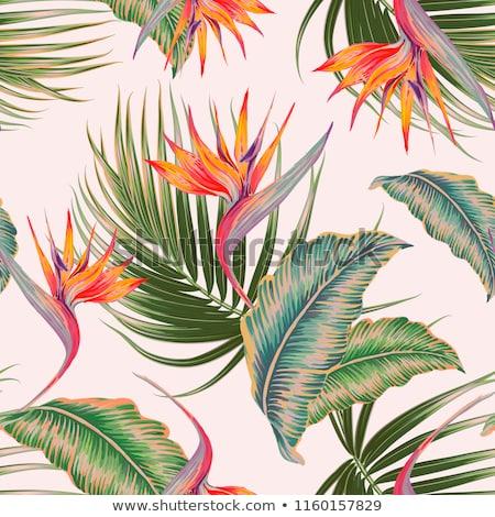 Design oiseau paradis fleurs illustration Photo stock © colematt