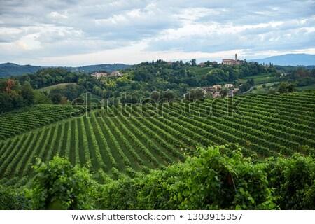 Conegliano vineyard at daylight stock photo © frimufilms