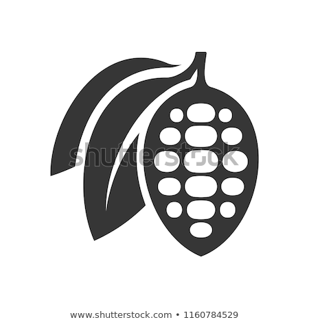vector icon of cocoa bean stock photo © freesoulproduction