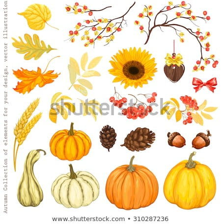 Autumn Flowers and Ear of Wheat Isolated Set Vector Stock photo © robuart