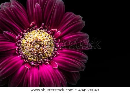 Amarelo macro tiro flor beleza Foto stock © mroz