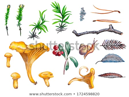 Mushroom in branch of the cowberry Stock photo © RuslanOmega