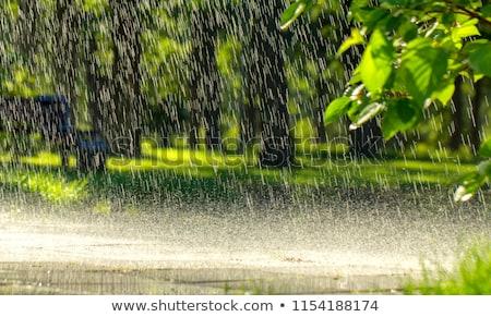 Torrential Rain Stock photo © pixelman